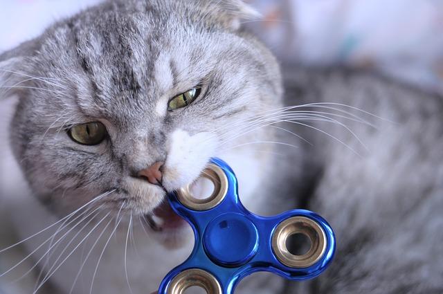 spinner a kočka